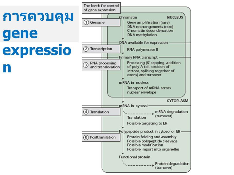 การควบคุม gene expressio n