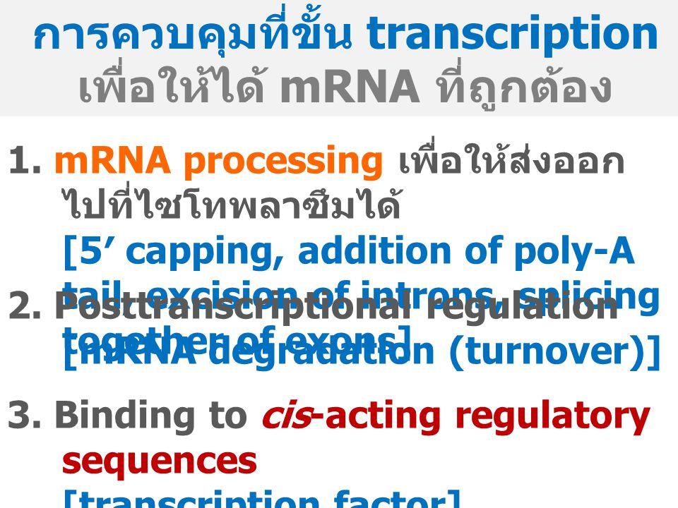 การควบคุมที่ขั้น transcription เพื่อให้ได้ mRNA ที่ถูกต้อง 1.