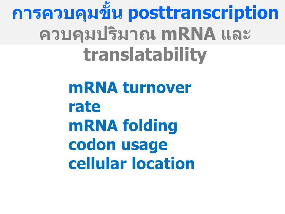 การควบคุมขั้น posttranscription ควบคุมปริมาณ mRNA และ translatability mRNA turnover rate mRNA folding codon usage cellular location