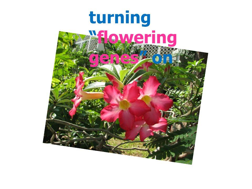turning flowering genes on