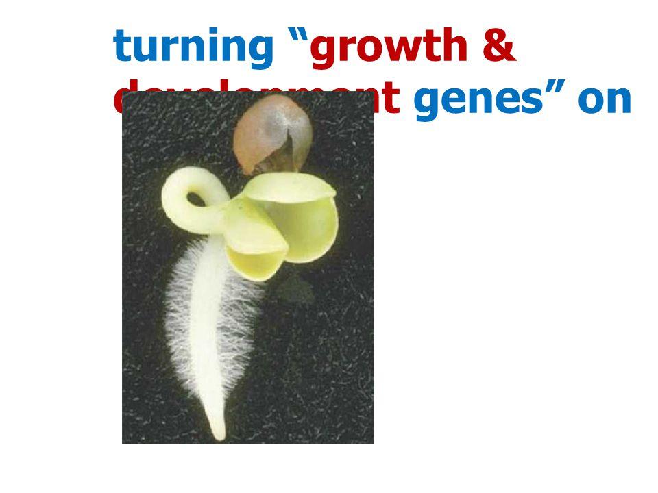 turning growth & development genes on