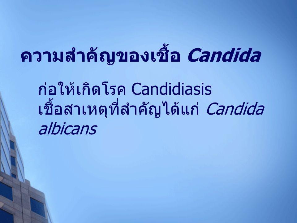ความสำคัญของเชื้อ Candida ก่อให้เกิดโรค Candidiasis เชื้อสาเหตุที่สำคัญได้แก่ Candida albicans