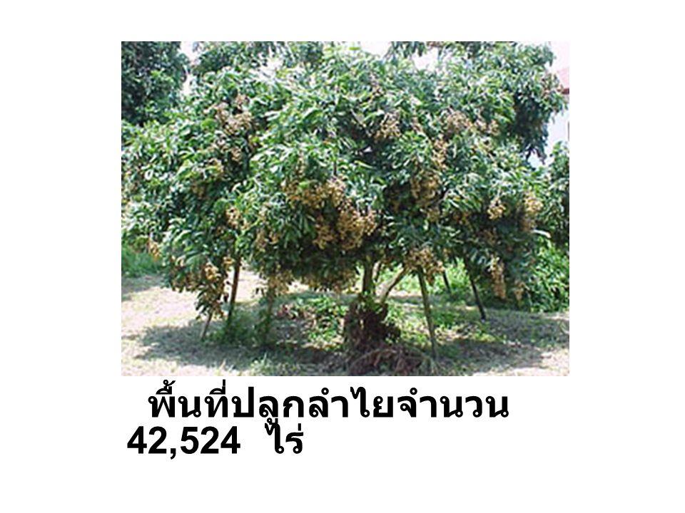 พื้นที่ปลูก กระเทียม 121 ไร่ พื้นที่ปลูก หอมแดง 80 ไร่