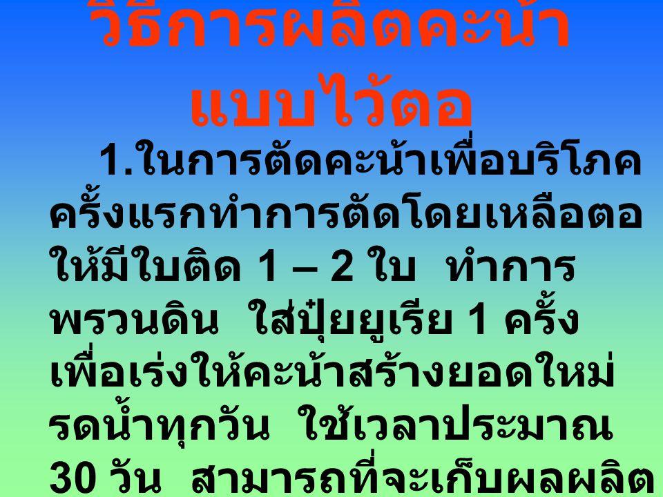 การปลูกแบบหมุนเวียน แปล งที่ ครั้ง ที่ 1 ครั้ง ที่ 2 ครั้ง ที่ 3 ครั้ง ที่ 4 ครั้ง ที่ 5 ครั้ง ที่ 6 145105165225285345 260120180240300 375135195255315 490150210270330