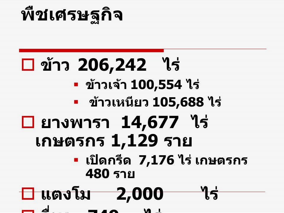 พืชเศรษฐกิจ  ข้าว 206,242 ไร่  ข้าวเจ้า 100,554 ไร่  ข้าวเหนียว 105,688 ไร่  ยางพารา 14,677 ไร่ เกษตรกร 1,129 ราย  เปิดกรีด 7,176 ไร่ เกษตรกร 480 ราย  แตงโม 2,000 ไร่  อื่นๆ 749 ไร่