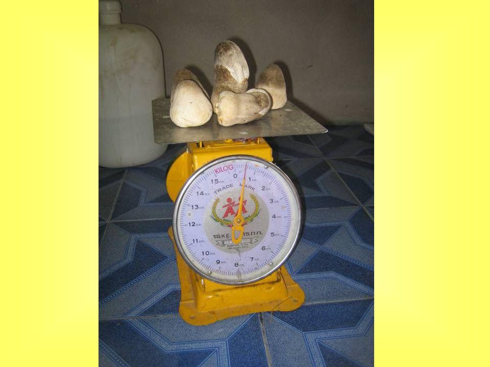 สูตรที่ 1 วัสดุเพาะ ขี้เลื่อยที่เพาะเห็ดในถุงพลาสติกอายุ 3 เดือน 15 ก้อน ผักตบชวาสดหั่น 1 กิโลกรัม แป้งข้าวเหนียวหรือแป้งสาลี 5 กรัม เชื้อเห็ดฟางอายุ 10 วัน 1 ถุง