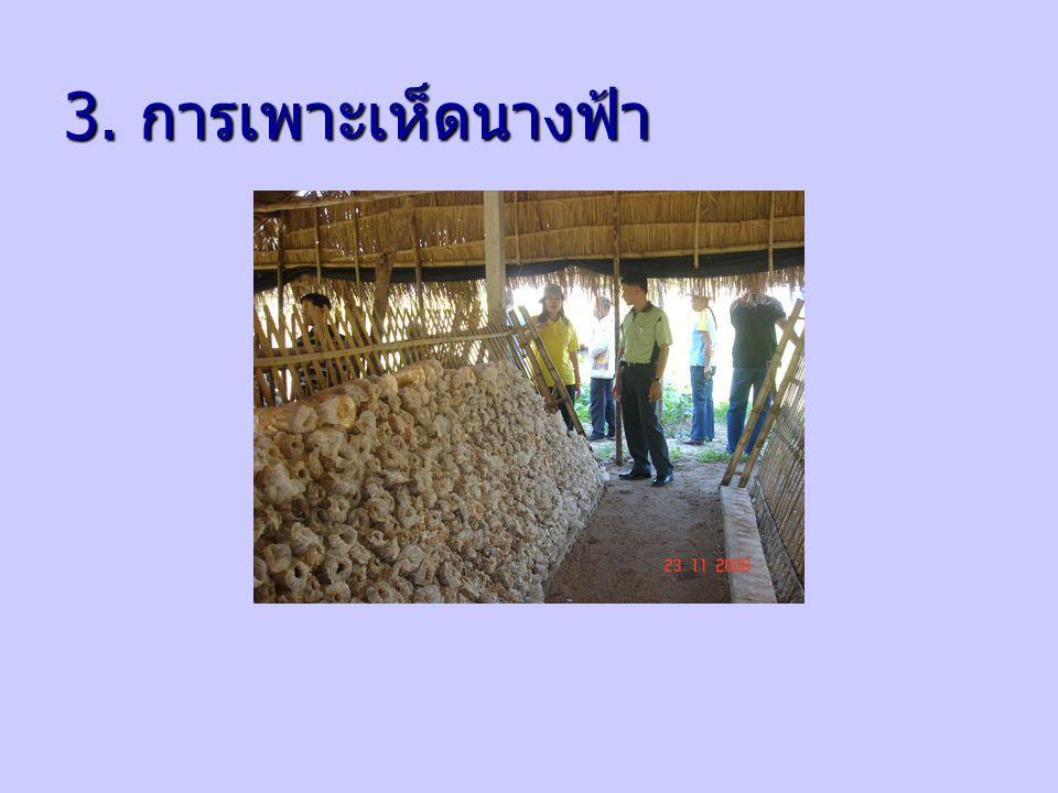 2. การปลูกผักปลอดภัยจาก สารพิษ