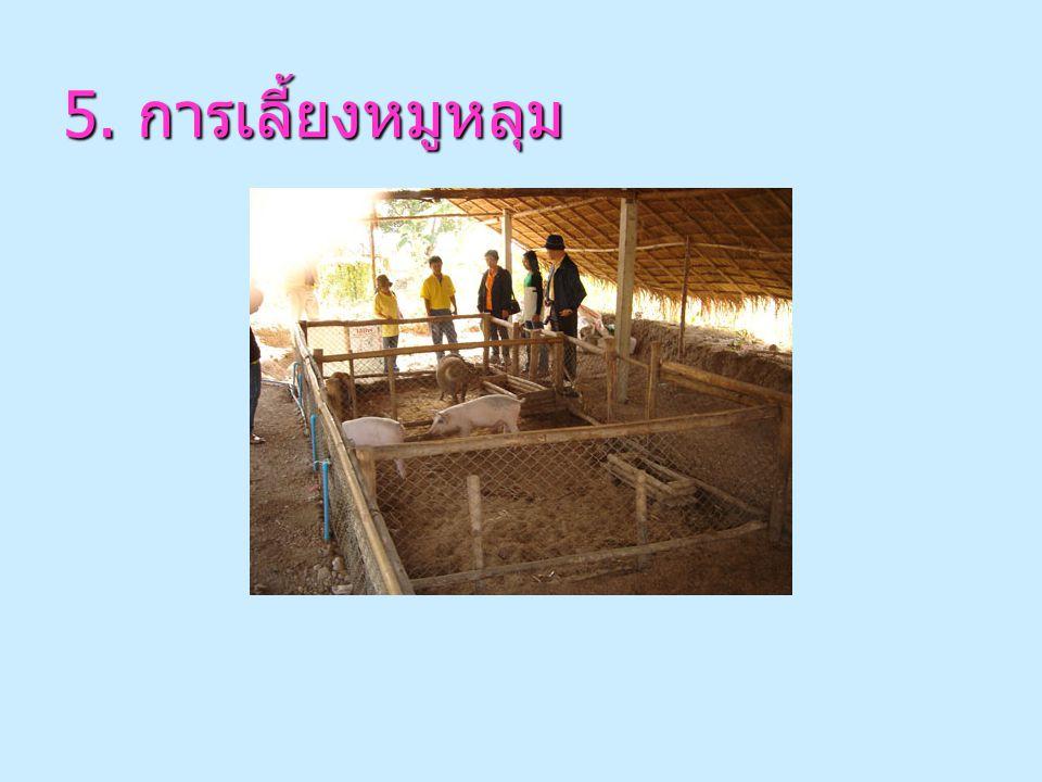 4. การปลูกผักพื้นบ้านและสมุนไพร