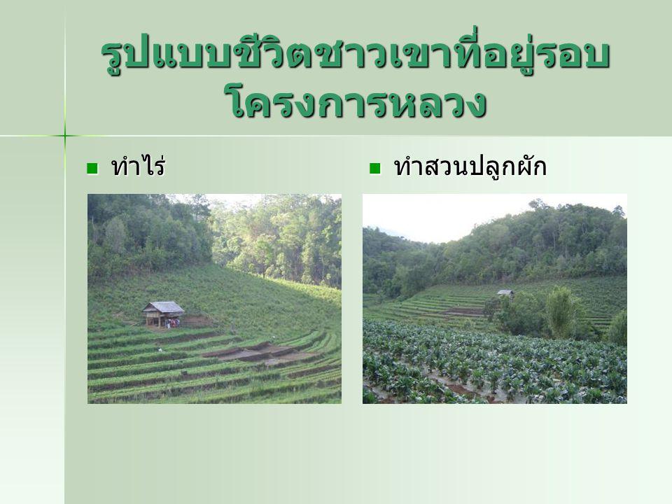 รูปแบบชีวิตชาวเขาที่อยู่รอบ โครงการหลวง ทำไร่ ทำไร่ ทำสวนปลูกผัก ทำสวนปลูกผัก