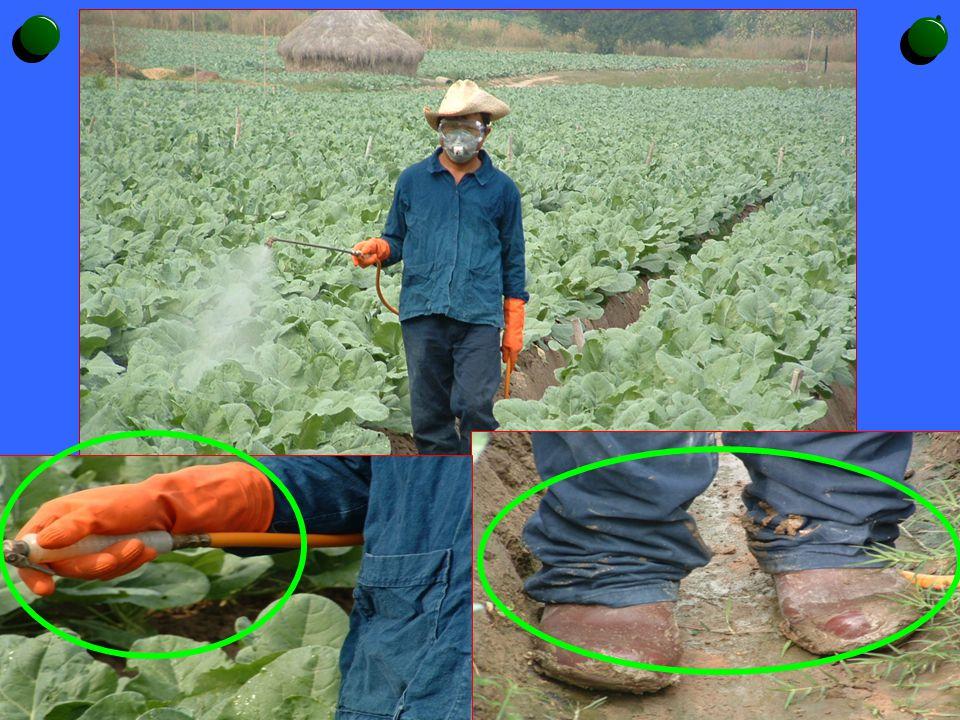สารเคมีกำจัดศัตรูพืช เข้าสู่ร่างกายได้ อย่างไร โดยทางปาก โดยทางผิวหนังโดยทางจมูก