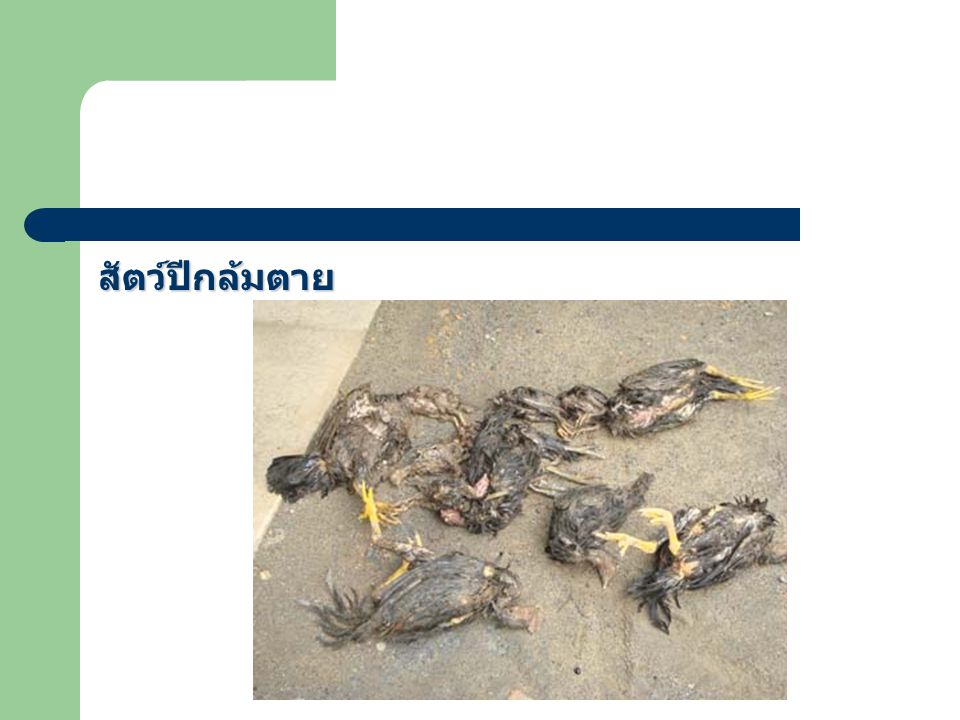 สัตว์ปีกล้มตาย