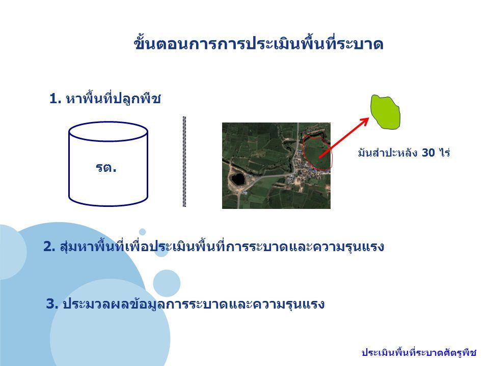 ขั้นตอนการการประเมินพื้นที่ระบาด ประเมินพื้นที่ระบาดศัตรูพืช 1. หาพื้นที่ปลูกพืช รต. 2. สุ่มหาพื้นที่เพื่อประเมินพื้นที่การระบาดและความรุนแรง 3. ประมว