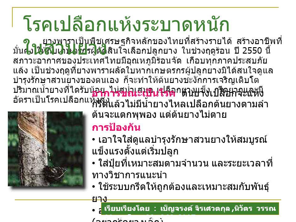 ยางพาราเป็นพืชเศรษฐกิจหลักของไทยที่สร้างรายได้ สร้างอาชีพที่ มั่นคง ให้กับเกษตรกรผู้ตัดสินใจเลือกปลูกยาง ในช่วงฤดูร้อน ปี 2550 นี้ สภาวะอากาศของประเทศไทยมีอุณหภูมิร้อนจัด เกือบทุกภาคประสบภัย แล้ง เป็นช่วงฤดูที่ยางพาราผลัดใบหากเกษตรกรผู้ปลูกยางมิได้สนใจดูแล บำรุงรักษาสวนยางของตนเอง ก็จะทำให้ต้นยางชะงักการเจริญเติบโต ปริมาณน้ำยางที่ไดรับน้อย ไม่สม่ำเสมอ เปลือกยางแข็ง กรีดยากและมี อัตราเป็นโรคเปลือกแห้งสูง โรคเปลือกแห้งระบาดหนัก ในสวนยาง อาการขณะเป็นโรค ต้นยางเปลือกจะแห้ง กรีดแล้วไม่มีน้ำยางไหลเปลือกต้นยางตามลำ ต้นจะแตกพุพอง แต่ต้นยางไม่ตาย การป้องกัน เอาใจใส่ดูแลบำรุงรักษาสวนยางให้สมบูรณ์ แข็งแรงตั้งแต่เริ่มปลูก ใส่ปุ๋ยที่เหมาะสมตามจำนวน และระยะเวลาที่ ทางวิชาการแนะนำ ใช้ระบบกรีดให้ถูกต้องและเหมาะสมกับพันธุ์ ยาง อย่ากรีดยางเมื่อยางยังไม่ได้ขนาดเปิดกรีด ( อย่ากรีดยางเล็ก ) หยุดกรีดยางในขณะยางผลัดใบ และเริ่มเปิด กรีดยางใหม่เมื่อใบ ยางที่ผลิงอกจนเป็นใบแก่เติมที่แล้ว เรียบเรียงโดย : เบ็ญจรงค์ จิรเศวตกุล, นิวัตร วรรณ นิธิกุล โทร.