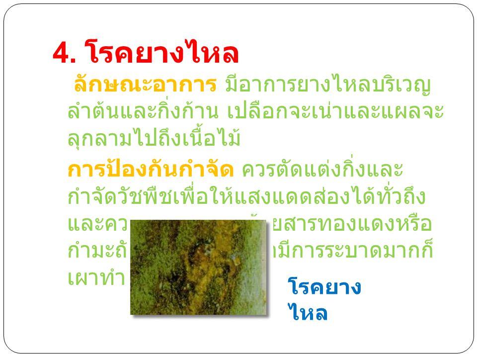 4. โรคยางไหล ลักษณะอาการ มีอาการยางไหลบริเวญ ลำต้นและกิ่งก้าน เปลือกจะเน่าและแผลจะ ลุกลามไปถึงเนื้อไม้ การป้องกันกำจัด ควรตัดแต่งกิ่งและ กำจัดวัชพืชเพ
