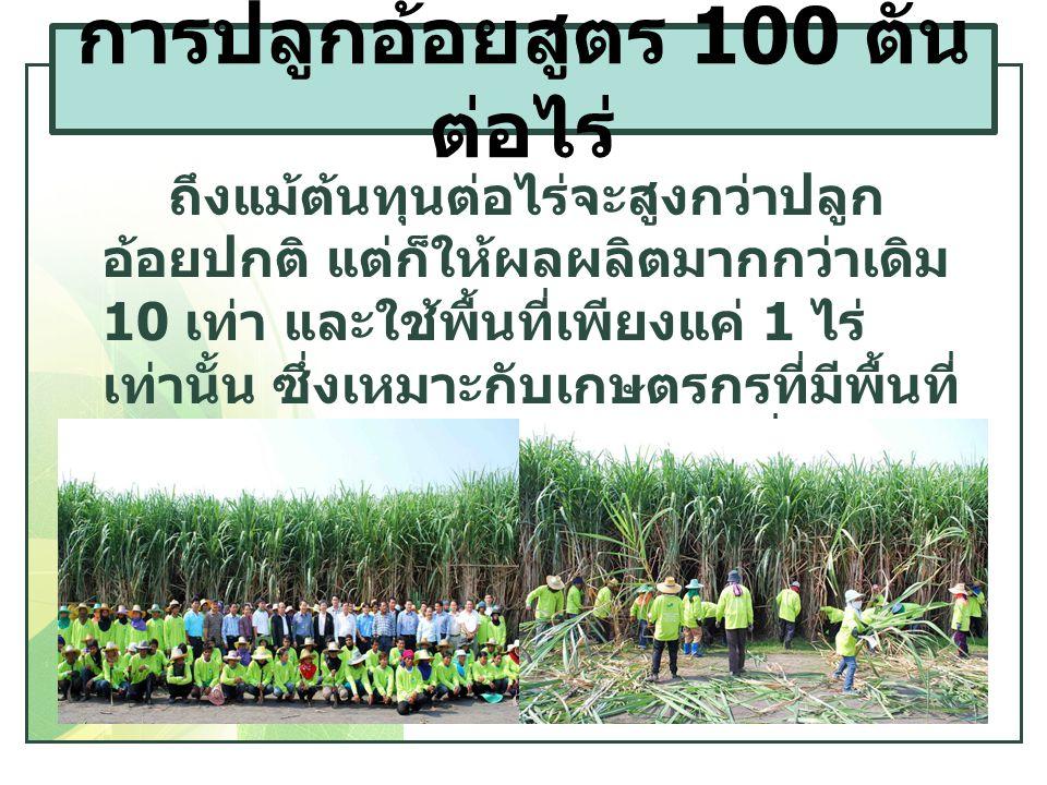 ถึงแม้ต้นทุนต่อไร่จะสูงกว่าปลูก อ้อยปกติ แต่ก็ให้ผลผลิตมากกว่าเดิม 10 เท่า และใช้พื้นที่เพียงแค่ 1 ไร่ เท่านั้น ซึ่งเหมาะกับเกษตรกรที่มีพื้นที่ ปลูกน้อย และต้องการปลูกเพื่อนำไป ขยายพันธุ์ต่อไป การปลูกอ้อยสูตร 100 ตัน ต่อไร่
