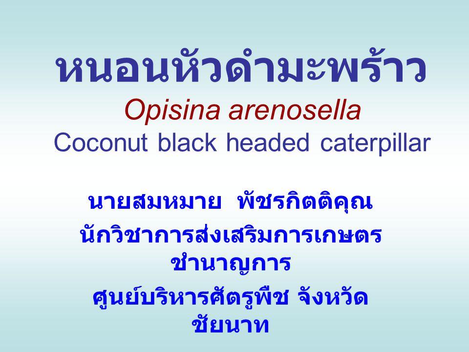 หนอนหัวดำมะพร้าว Opisina arenosella Coconut black headed caterpillar นายสมหมาย พัชรกิตติคุณ นักวิชาการส่งเสริมการเกษตร ชำนาญการ ศูนย์บริหารศัตรูพืช จั