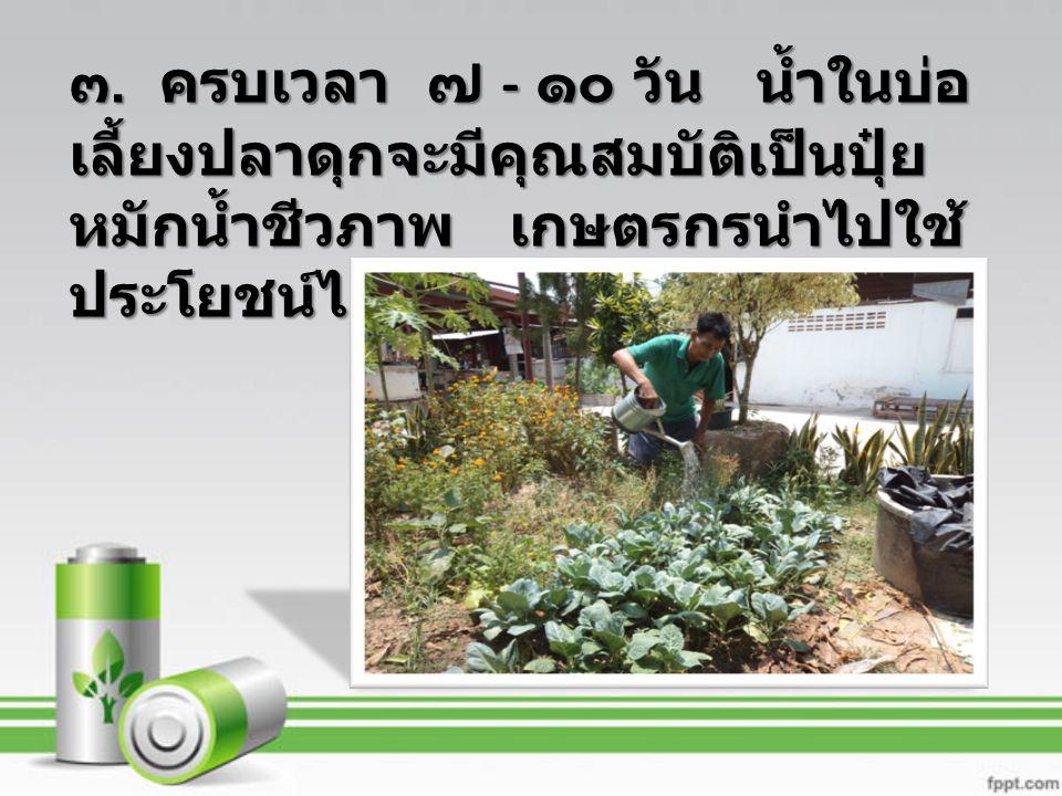 ๓. ครบเวลา ๗ - ๑๐ วัน น้ำในบ่อ เลี้ยงปลาดุกจะมีคุณสมบัติเป็นปุ๋ย หมักน้ำชีวภาพ เกษตรกรนำไปใช้ ประโยชน์ได้ทุกสัปดาห์