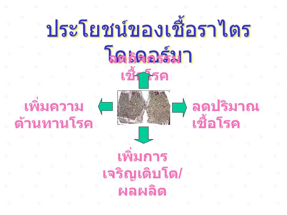 ประโยชน์ของเชื้อราไตร โคเดอร์มา ลดกิจกรรม เชื้อโรค เพิ่มความ ต้านทานโรค ลดปริมาณ เชื้อโรค เพิ่มการ เจริญเติบโต / ผลผลิต