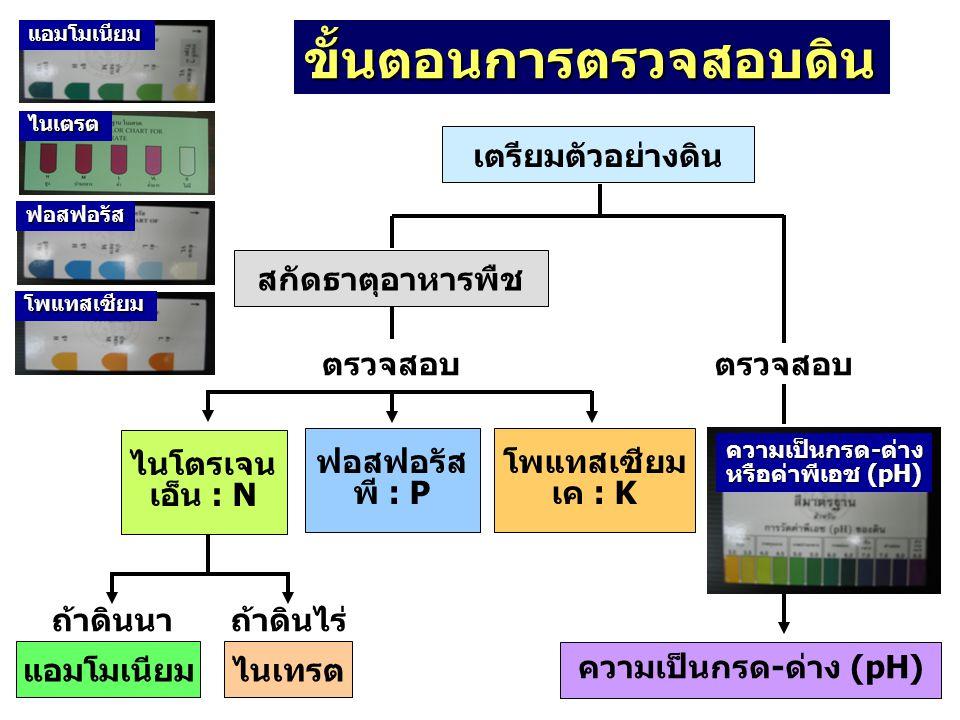 เตรียมตัวอย่างดิน สกัดธาตุอาหารพืช ความเป็นกรด-ด่าง (pH) ตรวจสอบ แอมโมเนียมไนเทรต ฟอสฟอรัส พี : P โพแทสเซียม เค : K ไนโตรเจน เอ็น : N ถ้าดินนาถ้าดินไร