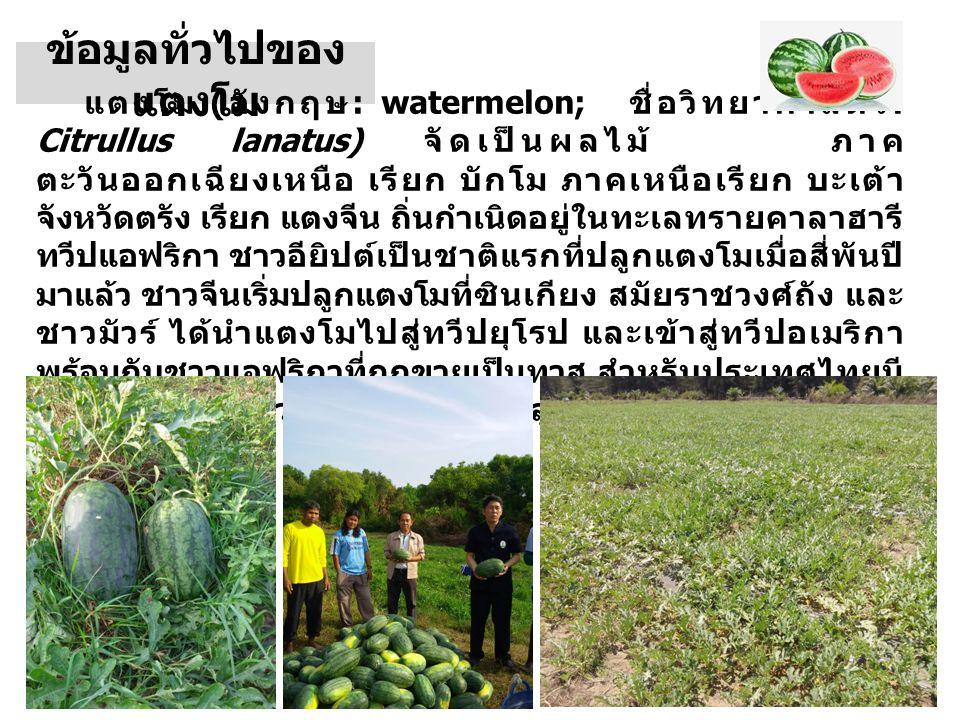 ข้อมูลทั่วไปของ แตงโม แตงโม ( อังกฤษ : watermelon; ชื่อวิทยาศาสตร์ : Citrullus lanatus) จัดเป็นผลไม้ ภาค ตะวันออกเฉียงเหนือ เรียก บักโม ภาคเหนือเรียก