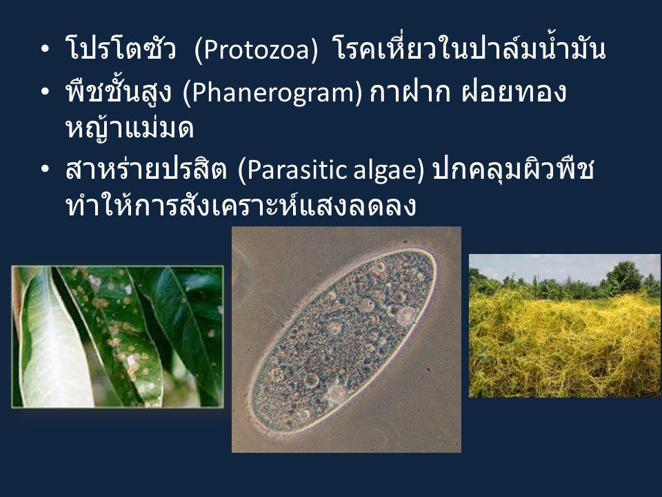 โปรโตซัว (Protozoa) โรคเหี่ยวในปาล์มน้ำมัน พืชชั้นสูง (Phanerogram) กาฝาก ฝอยทอง หญ้าแม่มด สาหร่ายปรสิต (Parasitic algae) ปกคลุมผิวพืช ทำให้การสังเคราะห์แสงลดลง
