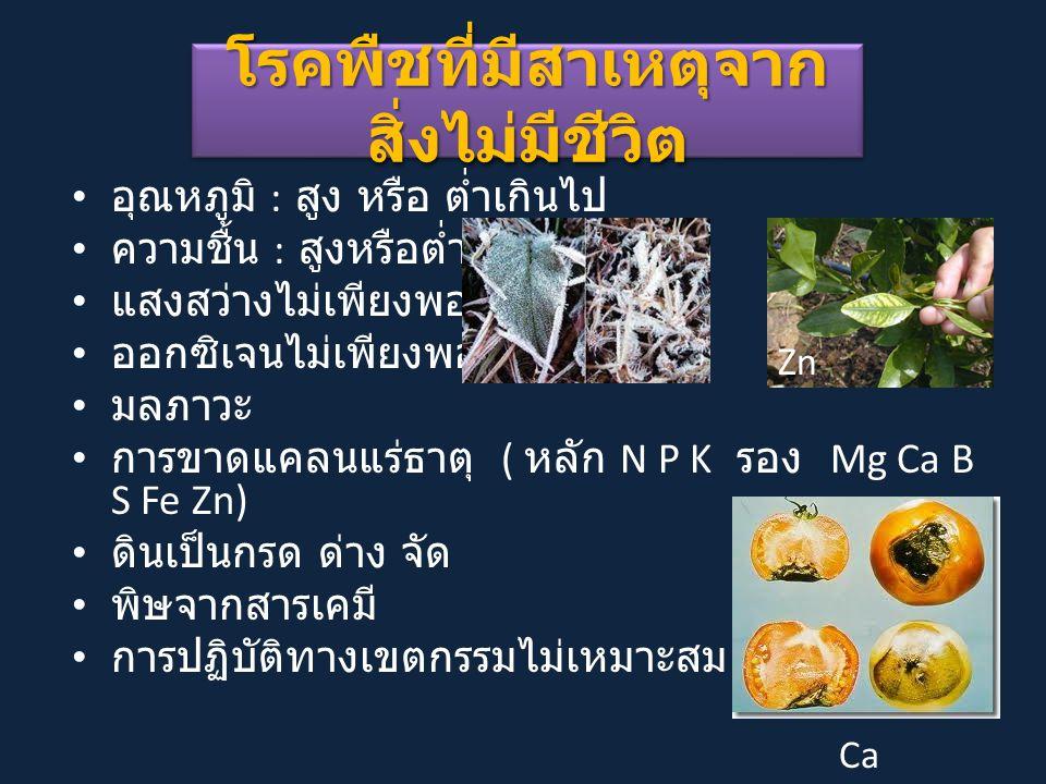 โรคพืชที่มีสาเหตุจาก สิ่งไม่มีชีวิต อุณหภูมิ : สูง หรือ ต่ำเกินไป ความชื้น : สูงหรือต่ำกินไป แสงสว่างไม่เพียงพอ ออกซิเจนไม่เพียงพอ มลภาวะ การขาดแคลนแร่ธาตุ ( หลัก N P K รอง Mg Ca B S Fe Zn) ดินเป็นกรด ด่าง จัด พิษจากสารเคมี การปฏิบัติทางเขตกรรมไม่เหมาะสม Zn Ca