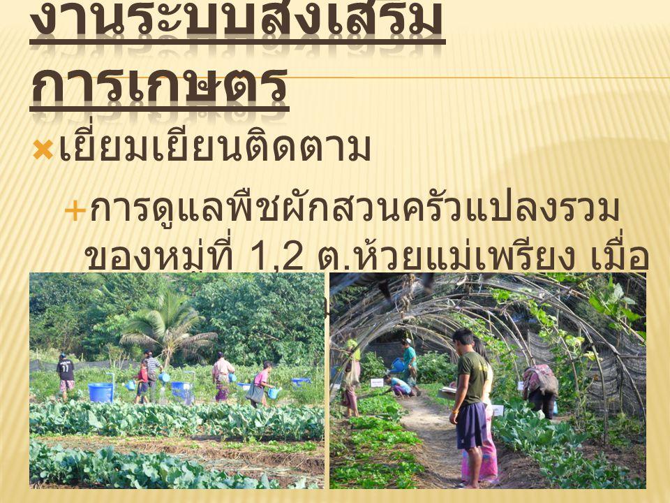  เยี่ยมเยียนติดตาม  การดูแลพืชผักสวนครัวแปลงรวม ของหมู่ที่ 1,2 ต. ห้วยแม่เพรียง เมื่อ วันที่ 5 มกราคม 2556