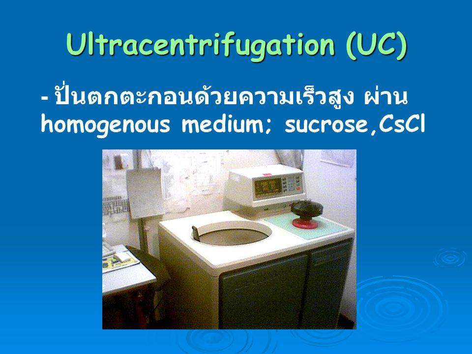 Ultracentrifugation (UC) - ปั่นตกตะกอนด้วยความเร็วสูง ผ่าน homogenous medium; sucrose,CsCl