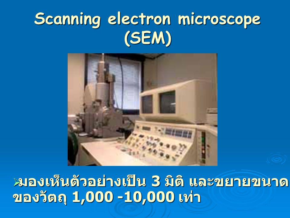 Scanning electron microscope (SEM)  มองเห็นตัวอย่างเป็น 3 มิติ และขยายขนาด ของวัตถุ 1,000 -10,000 เท่า
