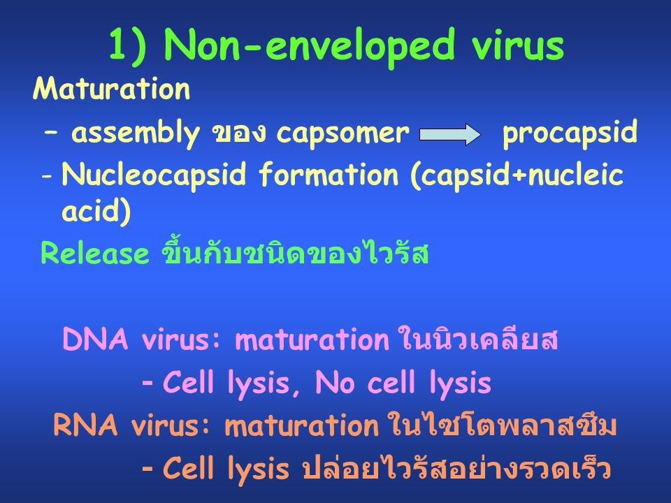 1) Non-enveloped virus Maturation – assembly ของ capsomer procapsid -Nucleocapsid formation (capsid+nucleic acid) Release ขึ้นกับชนิดของไวรัส DNA viru
