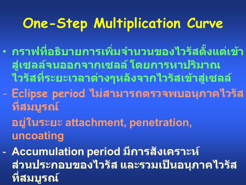 One-Step Multiplication Curve กราฟที่อธิบายการเพิ่มจำนวนของไวรัสตั้งแต่เข้า สู่เซลล์จนออกจากเซลล์ โดยการหาปริมาณ ไวรัสที่ระยะเวลาต่างๆหลังจากไวรัสเข้า