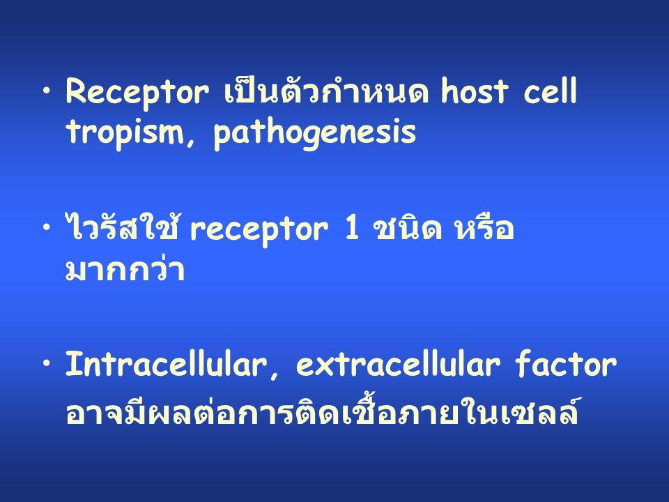 Receptor เป็นตัวกำหนด host cell tropism, pathogenesis ไวรัสใช้ receptor 1 ชนิด หรือ มากกว่า Intracellular, extracellular factor อาจมีผลต่อการติดเชื้อภ
