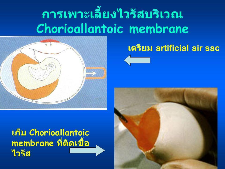 การเพาะเลี้ยงไวรัสบริเวณ Chorioallantoic membrane เก็บ Chorioallantoic membrane ที่ติดเชื้อ ไวรัส เตรียม artificial air sac