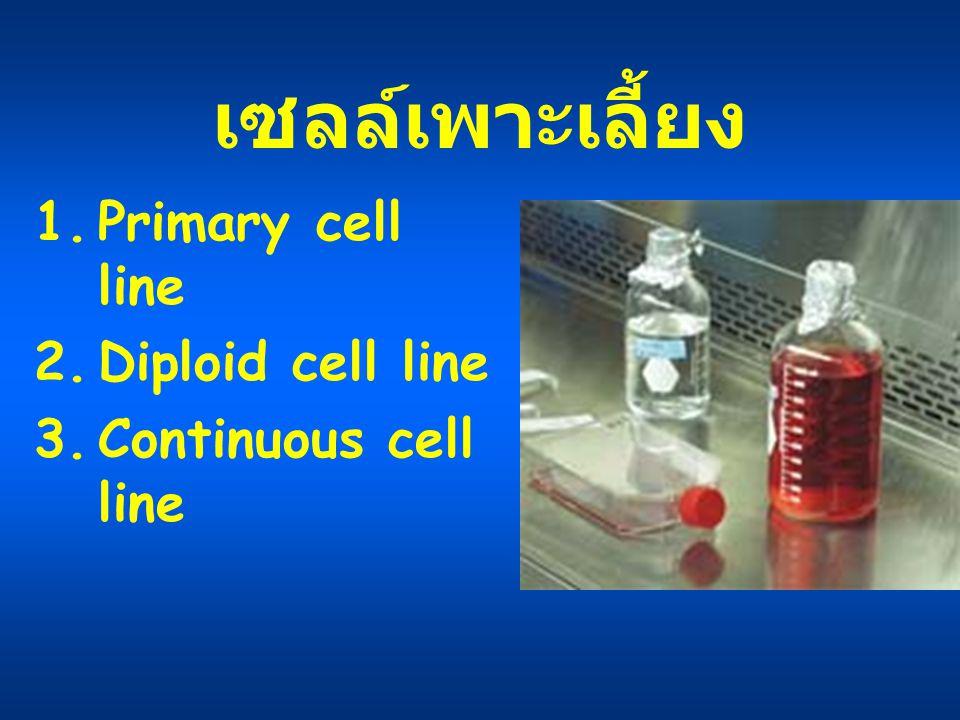 เซลล์เพาะเลี้ยง 1.Primary cell line 2.Diploid cell line 3.Continuous cell line
