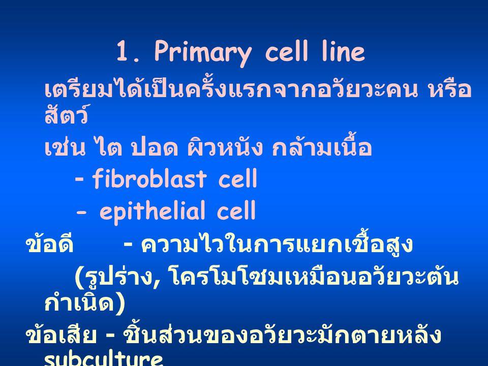 1. Primary cell line เตรียมได้เป็นครั้งแรกจากอวัยวะคน หรือ สัตว์ เช่น ไต ปอด ผิวหนัง กล้ามเนื้อ - fibroblast cell - epithelial cell ข้อดี - ความไวในกา