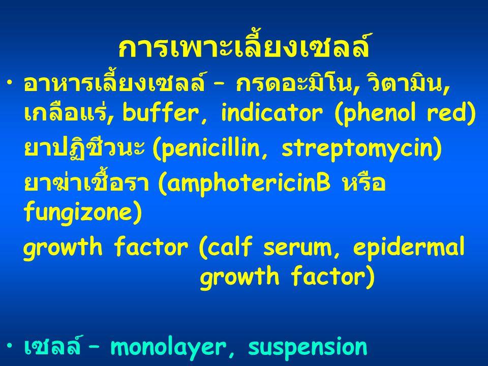 การเพาะเลี้ยงเซลล์ อาหารเลี้ยงเซลล์ – กรดอะมิโน, วิตามิน, เกลือแร่, buffer, indicator (phenol red) ยาปฏิชีวนะ (penicillin, streptomycin) ยาฆ่าเชื้อรา