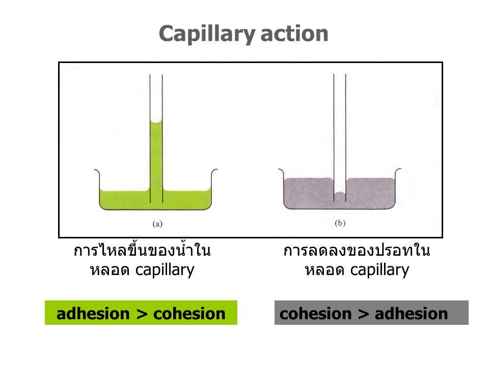 การไหลขึ้นของน้ำใน หลอด capillary adhesion > cohesion การลดลงของปรอทใน หลอด capillary cohesion > adhesion Capillary action