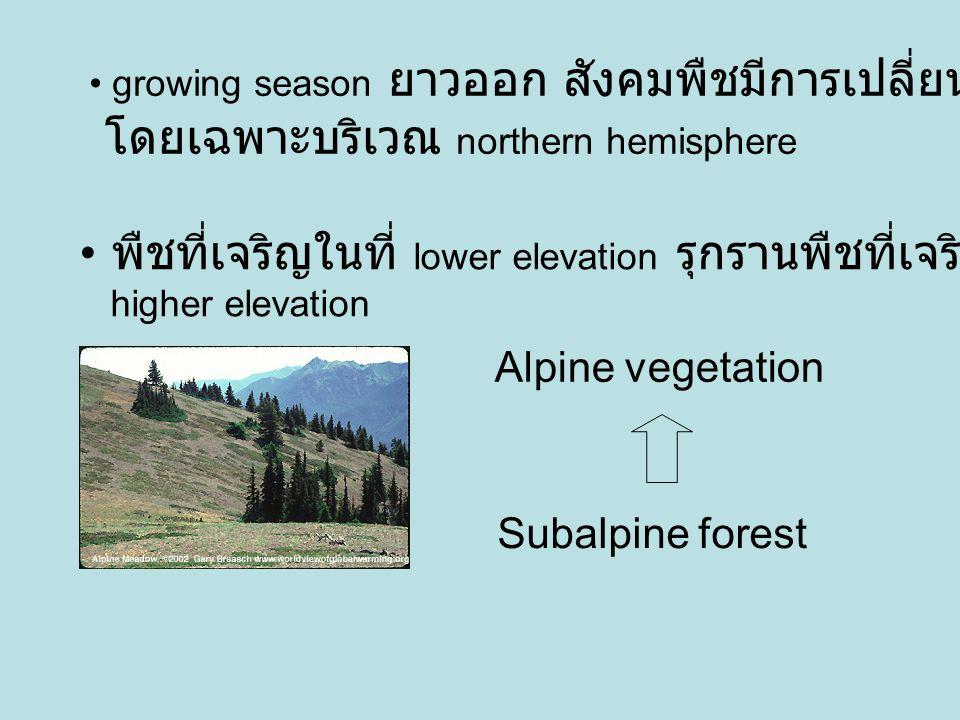 พืชที่เจริญในที่ lower elevation รุกรานพืชที่เจริญใน higher elevation Subalpine forest Alpine vegetation growing season ยาวออก สังคมพืชมีการเปลี่ยนแปล