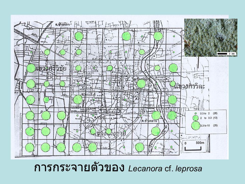 การกระจายตัวของ Lecanora cf. leprosa