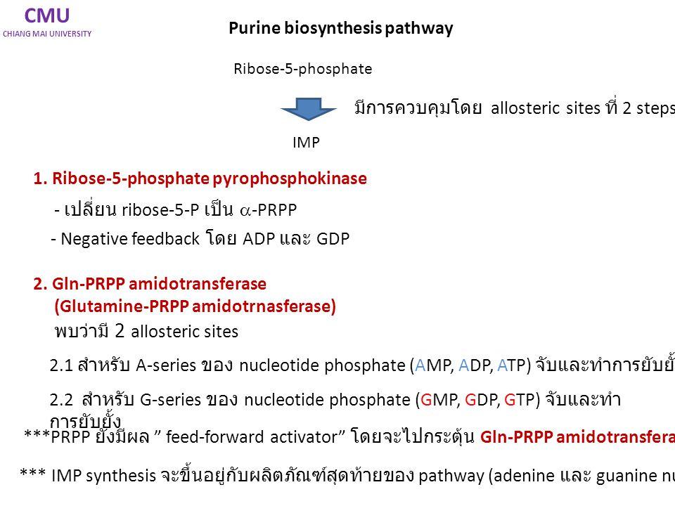 CMU CHIANG MAI UNIVERSITY Deoxyribonucleotide Biosynthesis Purine, pyrimidine biosynthesis เป็นการสังเคราะห์ AMP, GAP, UMP, CTP (ribonucleotides, RNA) Cells จะมีการเปลียนจาก RNA เป็น DNA เพื่อใช้ในการเป็นสารพันธุกรรมภายในเซลล์ Ribonucleotide reductase Substrate: NDPs (ribonucleotide diphosphate) Enzyme: Ribonucleotide reductase เร่งการเติมหมู่ hydride ion (H:-) แทนที่ –OH ในตำแหน่งที่ 2 ของ ribose Ribonucleotide reductase: Fe-dependent Enzyme ที่สามารถสร้าง free radical และช่วยในการถ่ายเท H:- หรือ electron ได้ดี