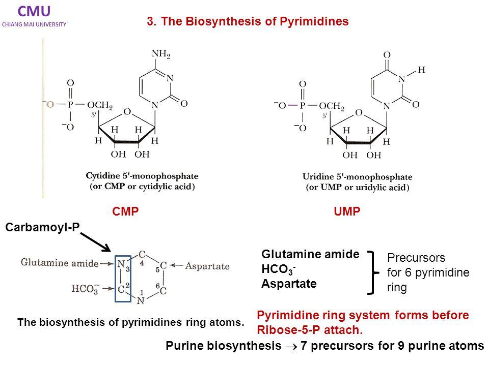 Regulation of Pyrimidine Biosynthesis Bacteria - จะถูกควบคุมใน allosteric enzymes: aspartate transcarbamoylase (ATCase).