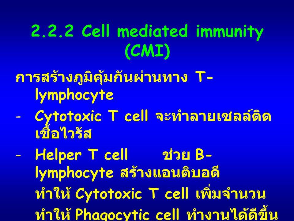 2.2.2 Cell mediated immunity (CMI) การสร้างภูมิคุ้มกันผ่านทาง T- lymphocyte -Cytotoxic T cell จะทำลายเซลล์ติด เชื้อไวรัส -Helper T cell ช่วย B- lympho