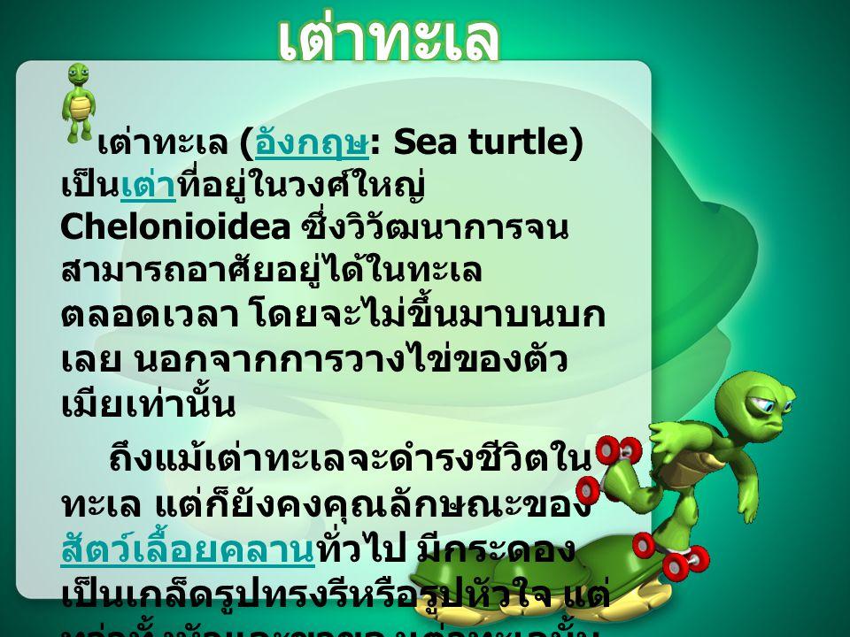 เสนอ อาจารย์ วิชัย บุญเจือ จัดทำโดย นางสาวโศภิษฐา อาจวิชัย 54030948 ภาควิชาวาริชศาสตร์ รายวิชาวิชา 885101 เทคโนโลยีสารสนเทศใน ชีวิตประจำวัน เรื่อง เต่าทะเล (Sea Turtle)