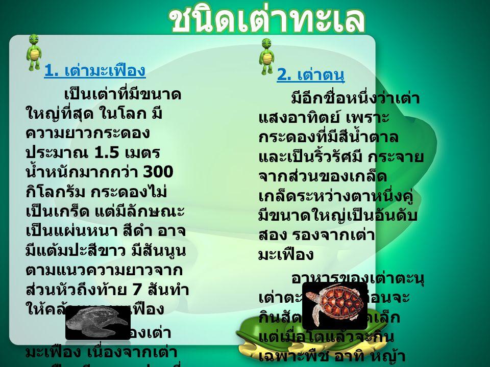 ในประเทศไทยพบเต่าทะเลเพียง 5 ชนิด คือ 1.เต่ามะเฟือง (Leatherback :Dermochelys coriacea) 2.