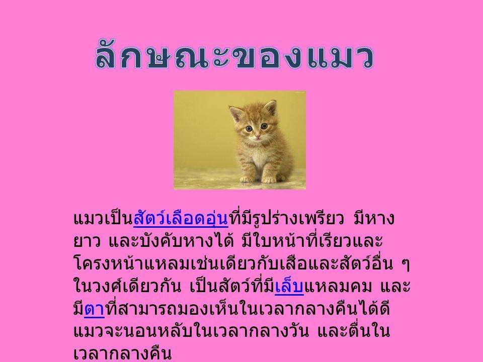 โดยทั่วไปมีการแบ่งพันธุ์แมวออกเป็น 2 ลักษณะ ใหญ่ๆ คือ แมวขนยาว (longhaired cat) และแมว ขนสั้น (shorthaired cats) การแบ่งพันธุ์ด้วยวิธีนี้ ทำให้จำแนกแมวออกได้ตามลักษณะพันธุ์ที่ จำเพาะต่างๆ กัน การจัดจำแนกแมวในยุโรปและ สหรัฐอเมริกามีการกำหนดมาตรฐานของพันธุ์แมว ที่เป็นที่ยอมรับกัน ทั้งนี้ลักษณะมาตรฐานของพันธุ์ ก็มีการเปลี่ยนแปลงอยู่บ่อยๆ แมวมีมากมายหลาย พันธุ์ เช่น แมวเปอร์เซีย แมววิเชียรมาศ ฯลฯ