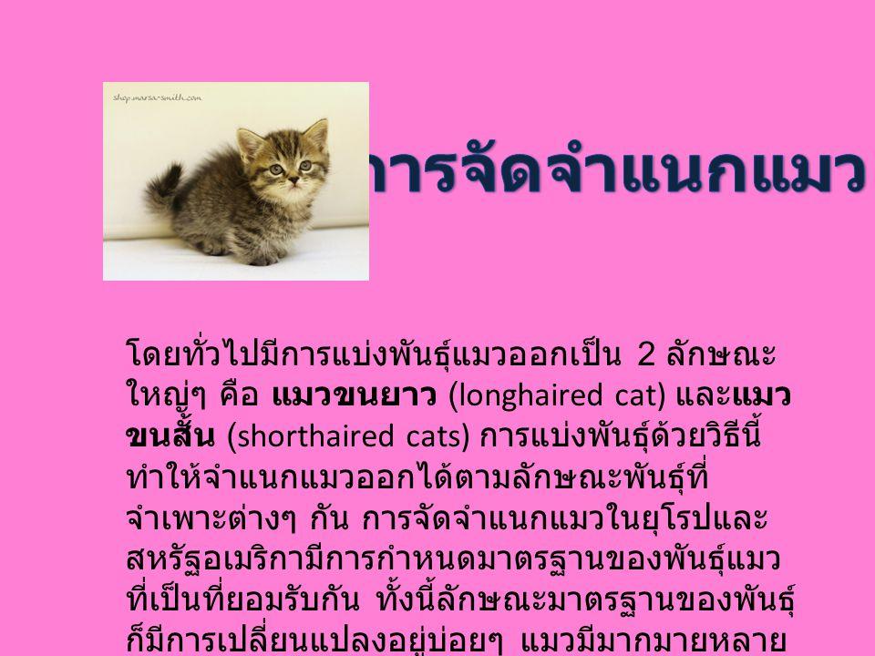 โดยทั่วไปมีการแบ่งพันธุ์แมวออกเป็น 2 ลักษณะ ใหญ่ๆ คือ แมวขนยาว (longhaired cat) และแมว ขนสั้น (shorthaired cats) การแบ่งพันธุ์ด้วยวิธีนี้ ทำให้จำแนกแม