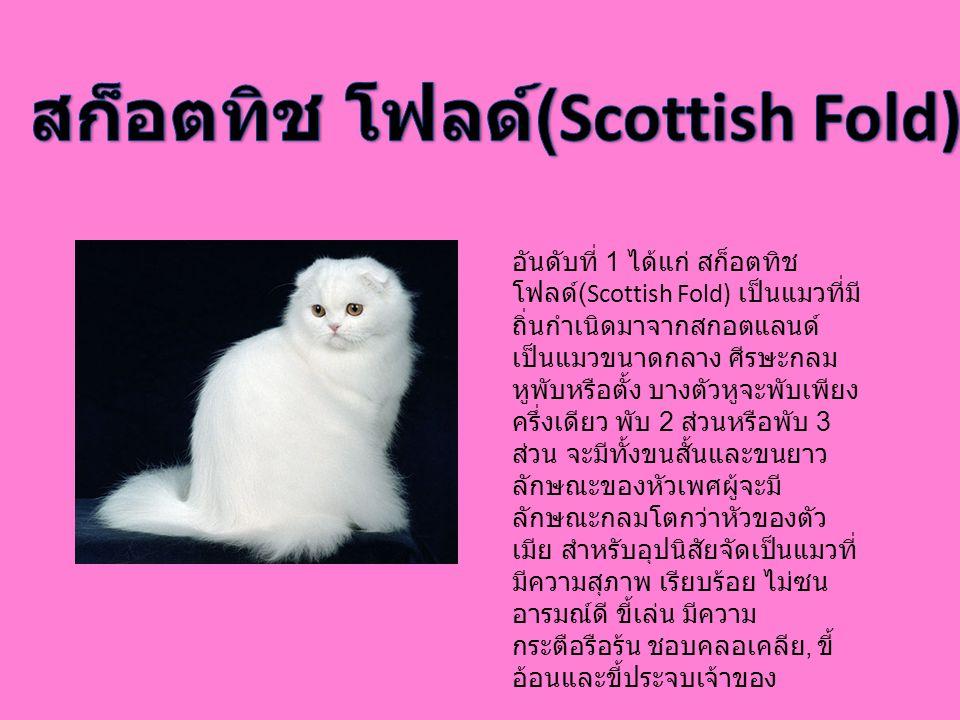 อันดับที่ 1 ได้แก่ สก็อตทิช โฟลด์ (Scottish Fold) เป็นแมวที่มี ถิ่นกำเนิดมาจากสกอตแลนด์ เป็นแมวขนาดกลาง ศีรษะกลม หูพับหรือตั้ง บางตัวหูจะพับเพียง ครึ่