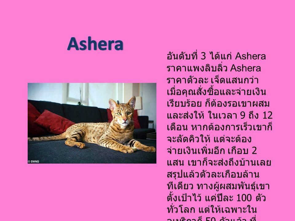 อันดับที่ 3 ได้แก่ Ashera ราคาแพงลิบลิ่ว Ashera ราคาตัวละ เจ็ดแสนกว่า เมื่อคุณสั่งซื้อและจ่ายเงิน เรียบร้อย ก็ต้องรอเขาผสม และส่งให้ ในเวลา 9 ถึง 12 เ