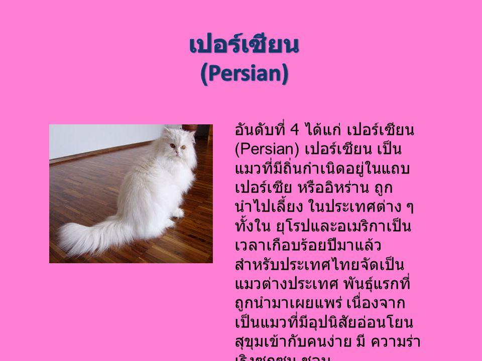 อันดับที่ 4 ได้แก่ เปอร์เซียน (Persian) เปอร์เซียน เป็น แมวที่มีถิ่นกำเนิดอยู่ในแถบ เปอร์เซีย หรืออิหร่าน ถูก นำไปเลี้ยง ในประเทศต่าง ๆ ทั้งใน ยุโรปแล