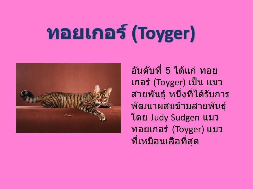 อันดับที่ 5 ได้แก่ ทอย เกอร์ (Toyger) เป็น แมว สายพันธุ์ หนึ่งที่ได้รับการ พัฒนาผสมข้ามสายพันธุ์ โดย Judy Sudgen แมว ทอยเกอร์ (Toyger) แมว ที่เหมือนเส